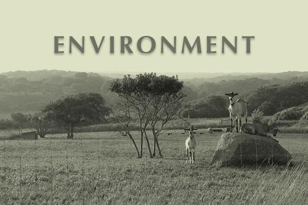 Endowment for Martha's Vineyard Environment